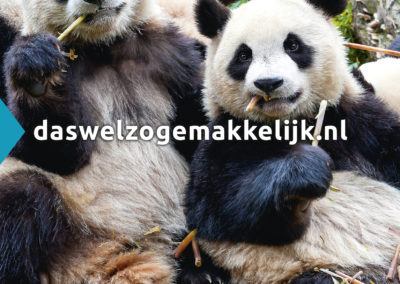 Klaar! A2 affiche panda's